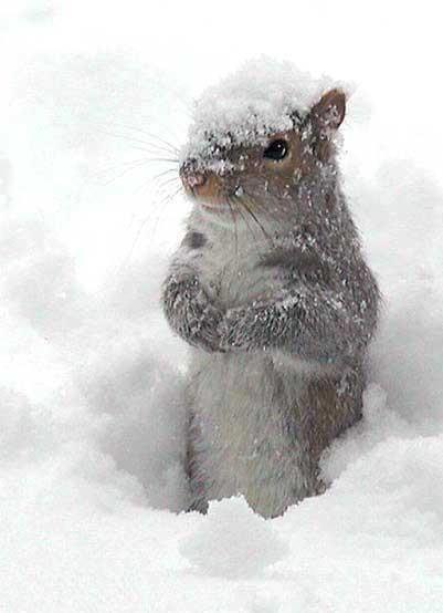 Le meilleur de l'hiver